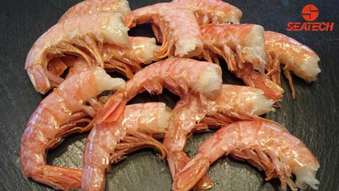 A photograph of Argentine red shrimp headless shell-on (HLSO).
