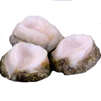 A photograph of Chilean loco meat which is similar to abalone.
